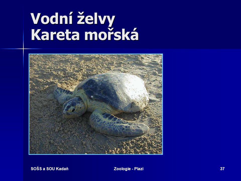SOŠS a SOU KadaňZoologie - Plazi36 Vodní želvy Želva nádherná
