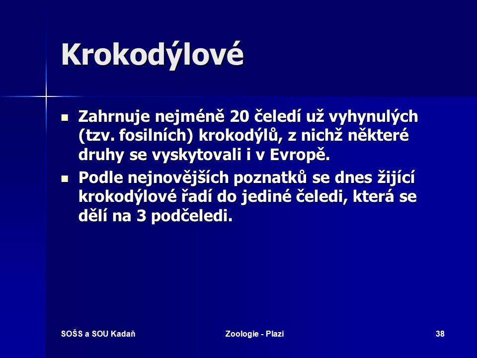 SOŠS a SOU KadaňZoologie - Plazi37 Vodní želvy Kareta mořská
