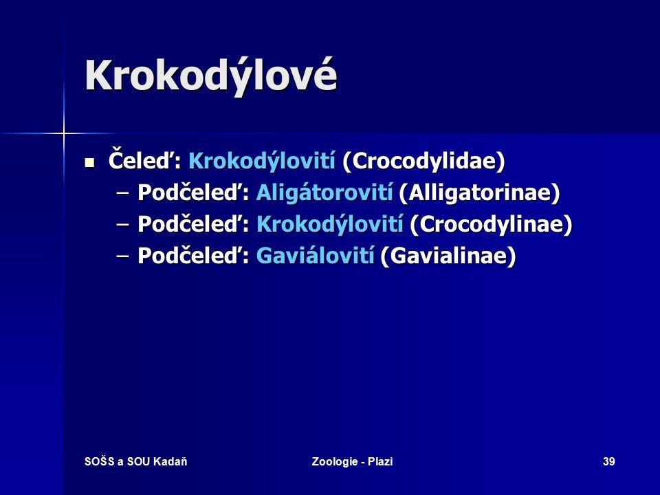 SOŠS a SOU KadaňZoologie - Plazi38 Krokodýlové Zahrnuje nejméně 20 čeledí už vyhynulých (tzv. fosilních) krokodýlů, z nichž některé druhy se vyskytova