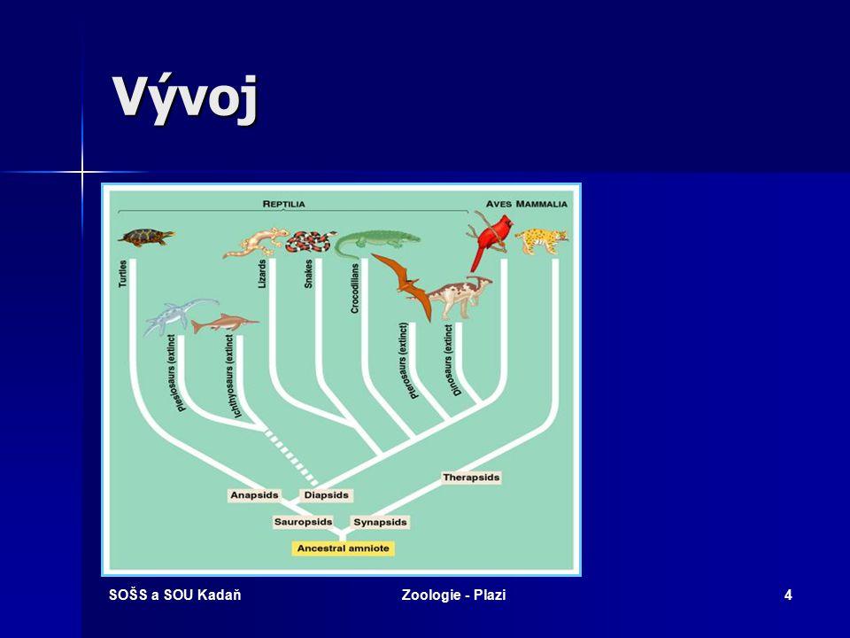 SOŠS a SOU KadaňZoologie - Plazi3 Vývoj Živočichové od plazů po savce prodělávají vývoj v chráněném plodovém obalu a nazývají se AMNIOTA.
