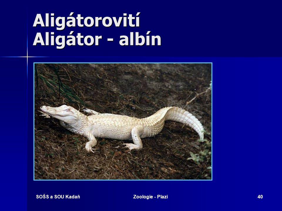 SOŠS a SOU KadaňZoologie - Plazi39 Krokodýlové Čeleď: Krokodýlovití (Crocodylidae) Čeleď: Krokodýlovití (Crocodylidae) –Podčeleď: Aligátorovití (Allig