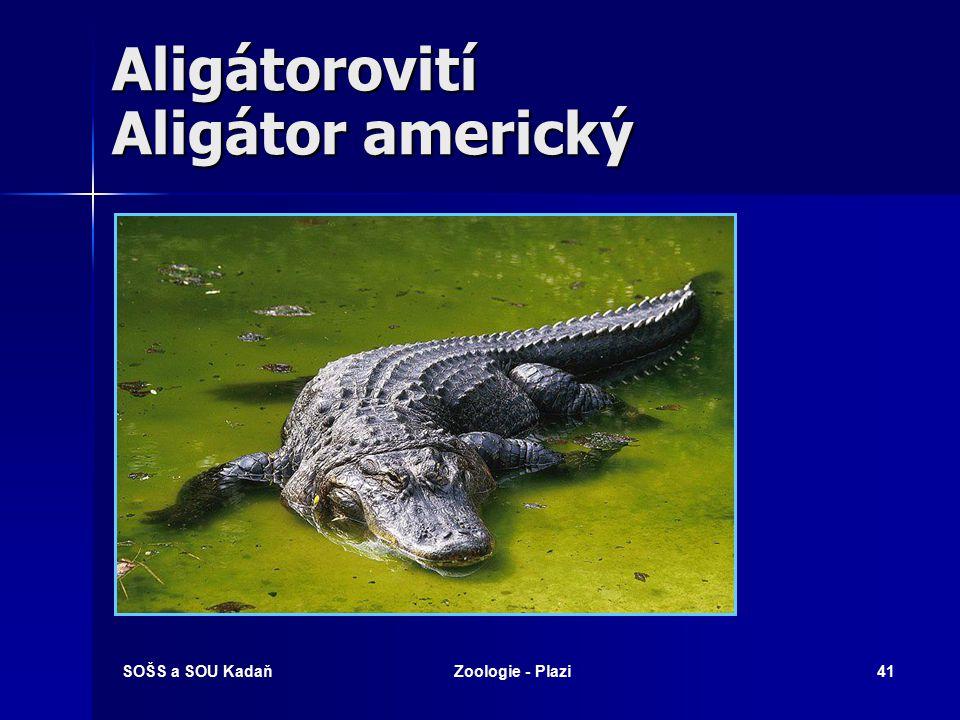 SOŠS a SOU KadaňZoologie - Plazi40 Aligátorovití Aligátor - albín