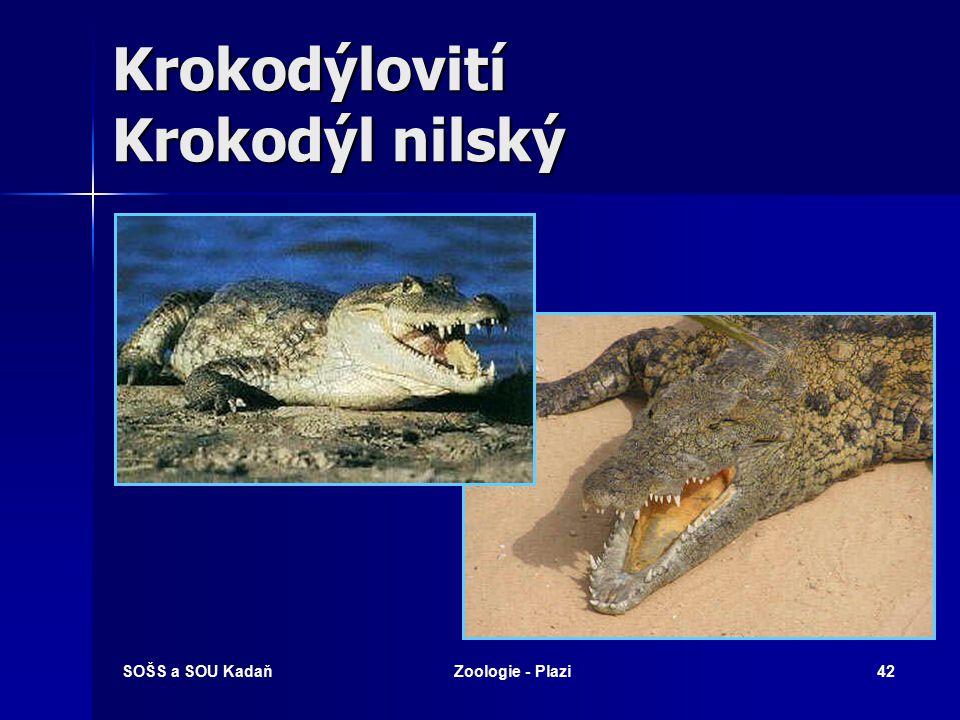 SOŠS a SOU KadaňZoologie - Plazi41 Aligátorovití Aligátor americký