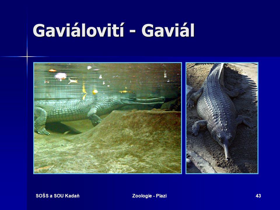 SOŠS a SOU KadaňZoologie - Plazi42 Krokodýlovití Krokodýl nilský