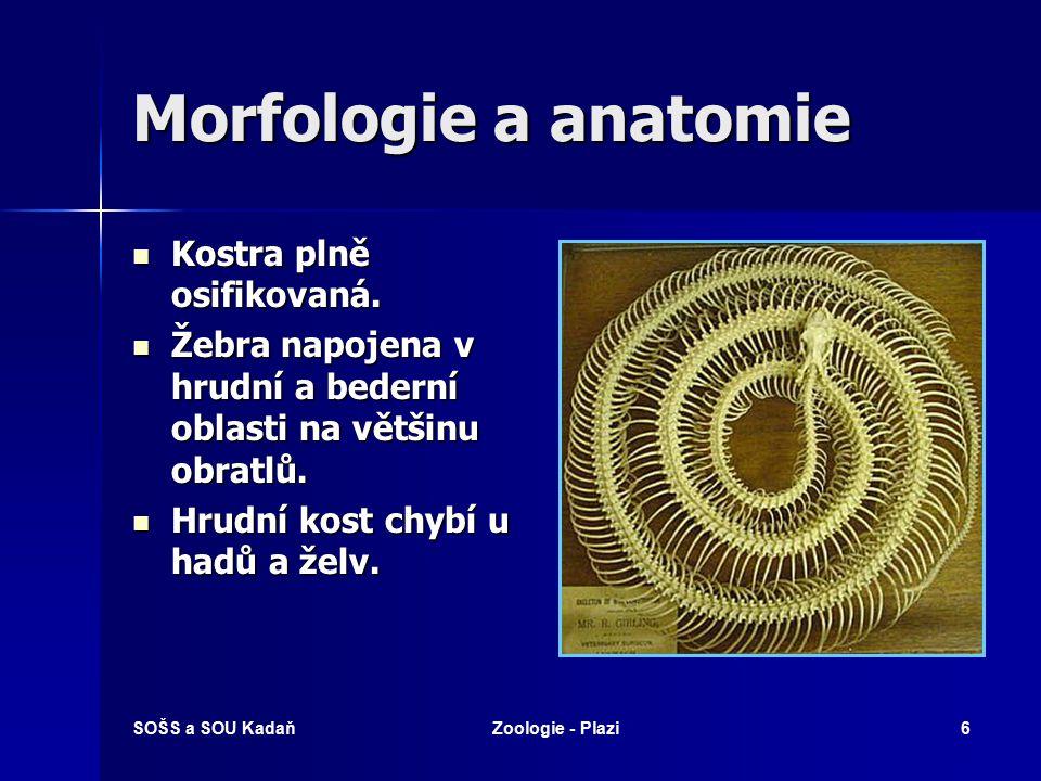 SOŠS a SOU KadaňZoologie - Plazi6 Morfologie a anatomie Kostra plně osifikovaná.