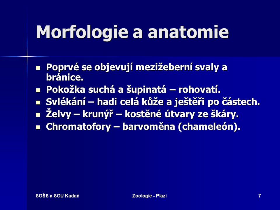 SOŠS a SOU KadaňZoologie - Plazi6 Morfologie a anatomie Kostra plně osifikovaná. Kostra plně osifikovaná. Žebra napojena v hrudní a bederní oblasti na