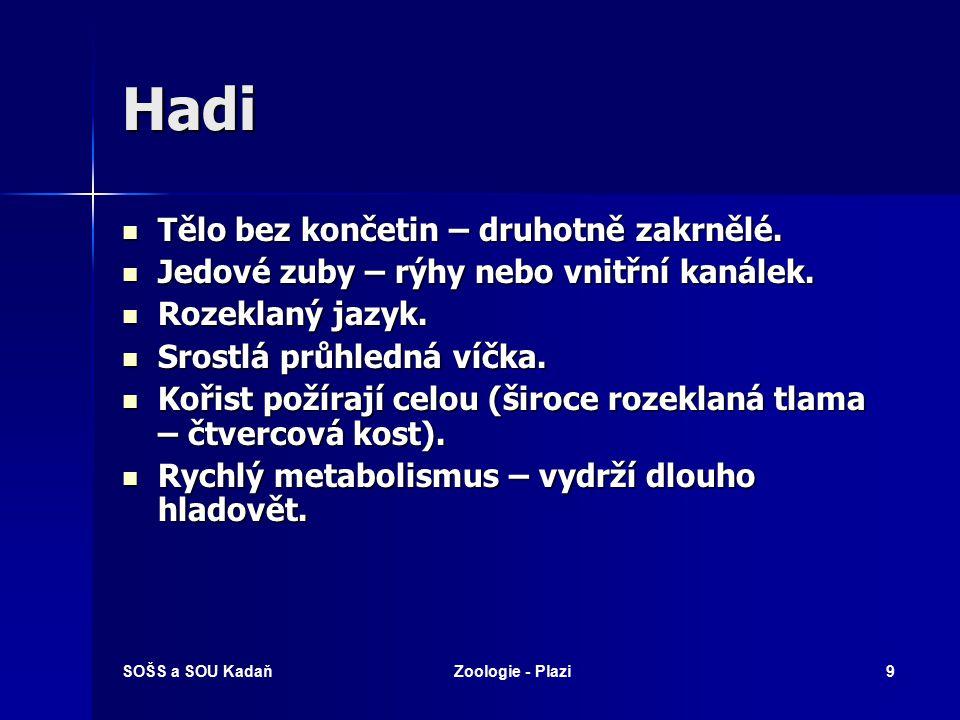 SOŠS a SOU KadaňZoologie - Plazi29 Ještěři – varanovití Varan komodský
