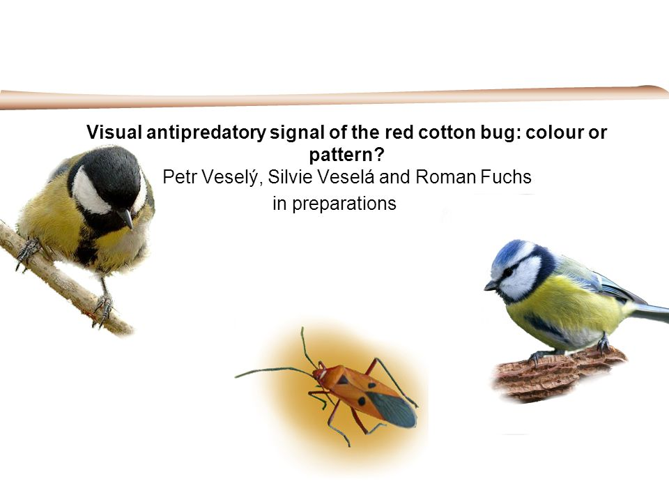 Visual antipredatory signal of the red cotton bug: colour or pattern? Petr Veselý, Silvie Veselá and Roman Fuchs in preparations