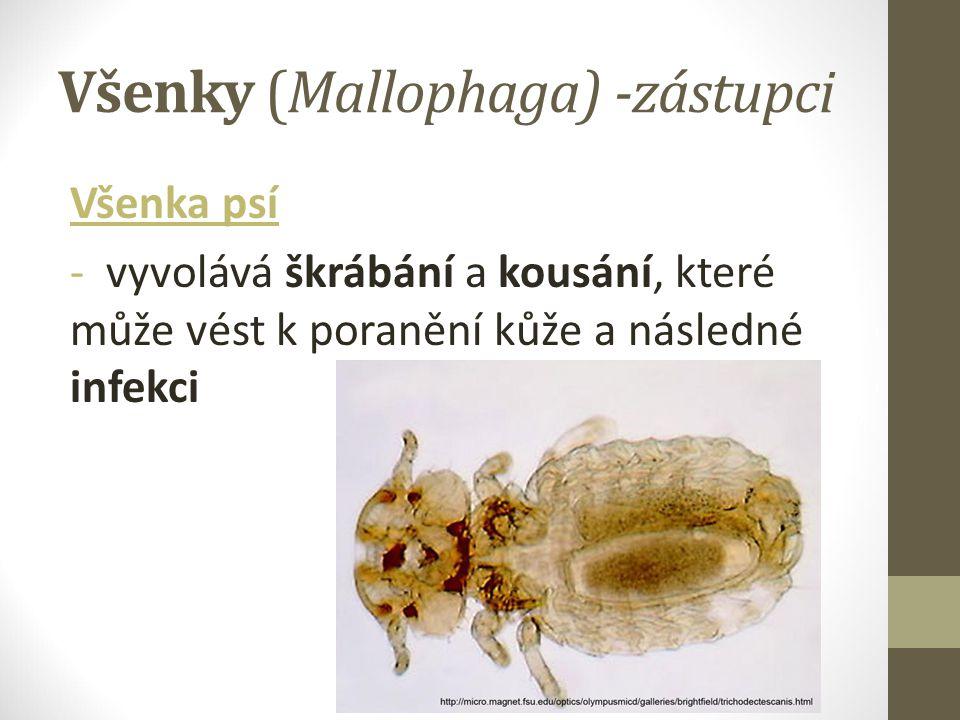 Všenky (Mallophaga) -zástupci Všenka psí - vyvolává škrábání a kousání, které může vést k poranění kůže a následné infekci