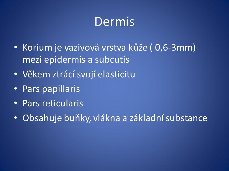 Dermis Korium je vazivová vrstva kůže ( 0,6-3mm) mezi epidermis a subcutis Věkem ztrácí svojí elasticitu Pars papillaris Pars reticularis Obsahuje buň