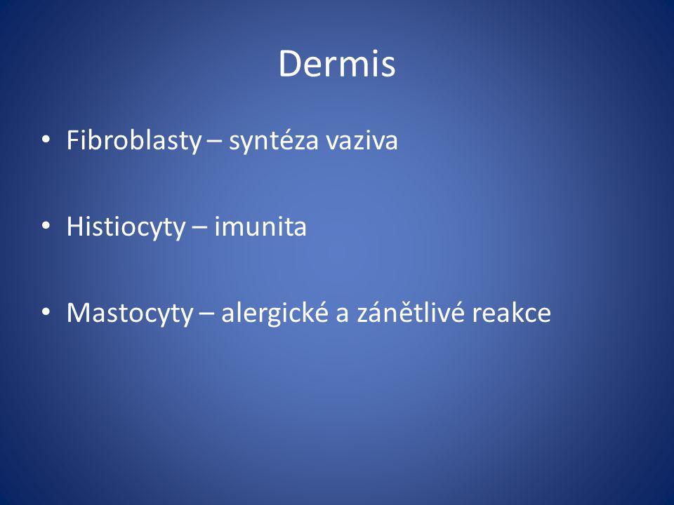 Dermis Fibroblasty – syntéza vaziva Histiocyty – imunita Mastocyty – alergické a zánětlivé reakce