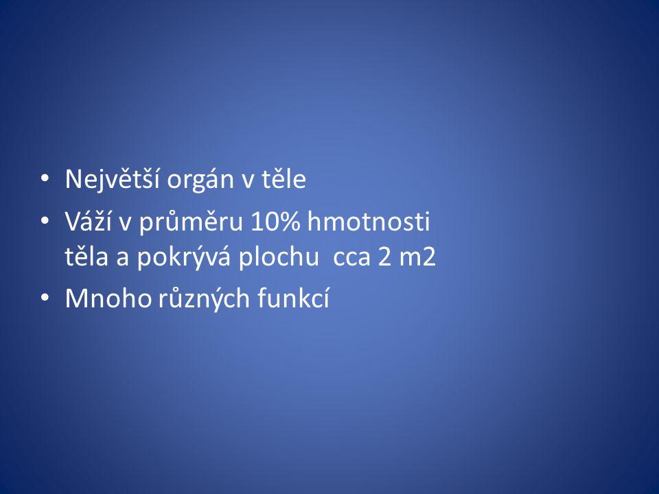 Největší orgán v těle Váží v průměru 10% hmotnosti těla a pokrývá plochu cca 2 m2 Mnoho různých funkcí