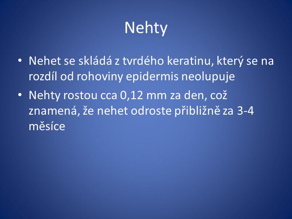 Nehty Nehet se skládá z tvrdého keratinu, který se na rozdíl od rohoviny epidermis neolupuje Nehty rostou cca 0,12 mm za den, což znamená, že nehet od