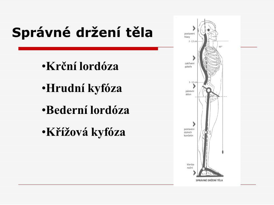 Správné držení těla Krční lordóza Hrudní kyfóza Bederní lordóza Křížová kyfóza