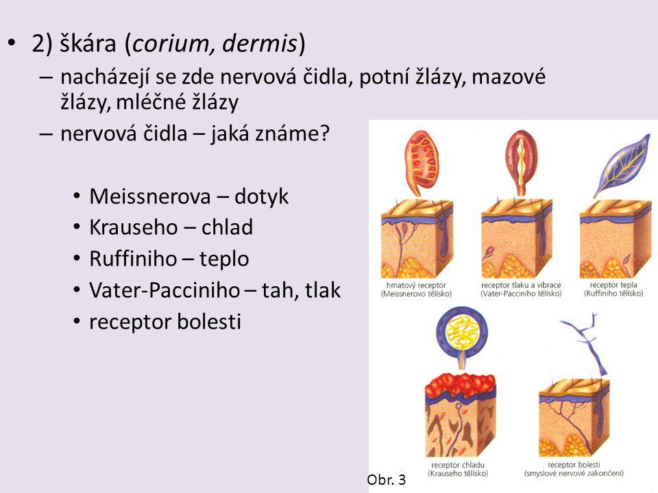 2) škára (corium, dermis) – nacházejí se zde nervová čidla, potní žlázy, mazové žlázy, mléčné žlázy – nervová čidla – jaká známe? Meissnerova – dotyk