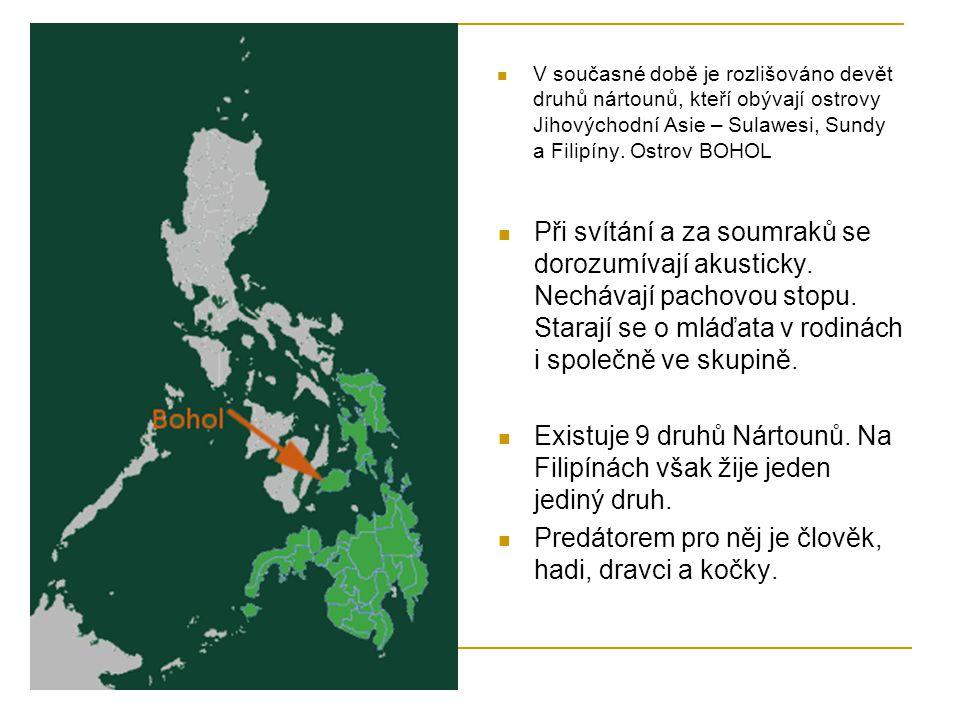 V současné době je rozlišováno devět druhů nártounů, kteří obývají ostrovy Jihovýchodní Asie – Sulawesi, Sundy a Filipíny. Ostrov BOHOL Při svítání a