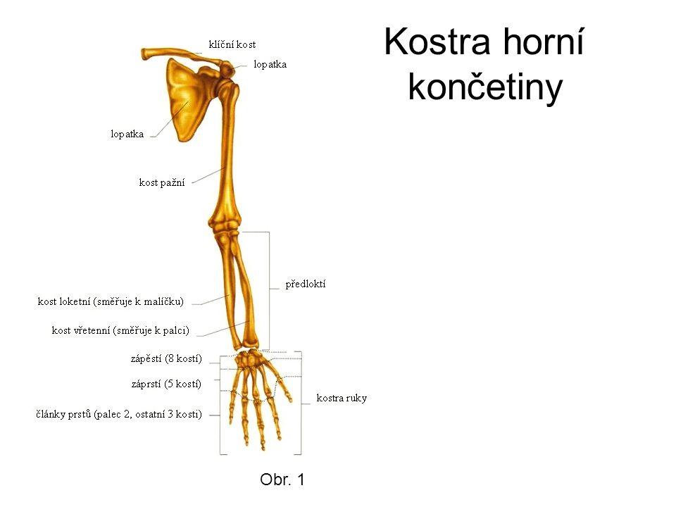 Kostra dolní končetiny Kost pánevní – srostlá z kosti kyčelní, sedací, stydké Obr. 2