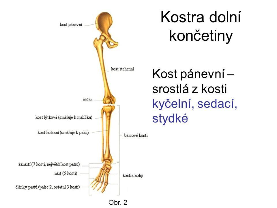 Chodidlo Kosti nártní, zánártní tvoří nožní klenbu.