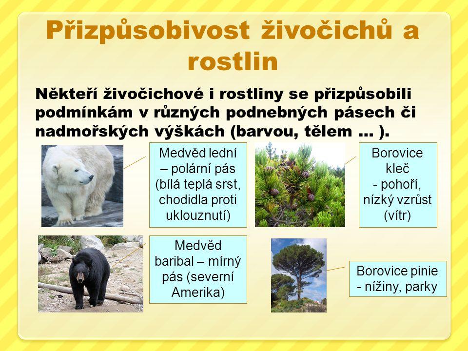 Přizpůsobivost živočichů a rostlin Někteří živočichové i rostliny se přizpůsobili podmínkám v různých podnebných pásech či nadmořských výškách (barvou