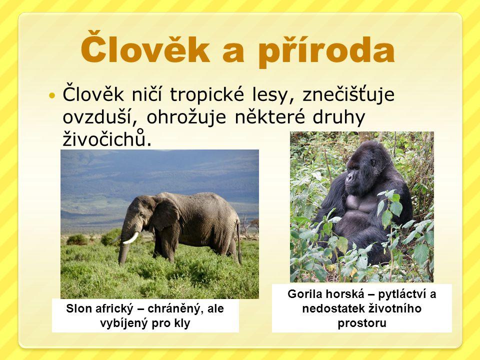 Člověk a příroda Člověk ničí tropické lesy, znečišťuje ovzduší, ohrožuje některé druhy živočichů. Slon africký – chráněný, ale vybíjený pro kly Gorila