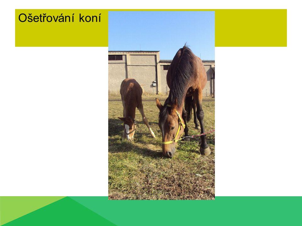Ošetřování koní