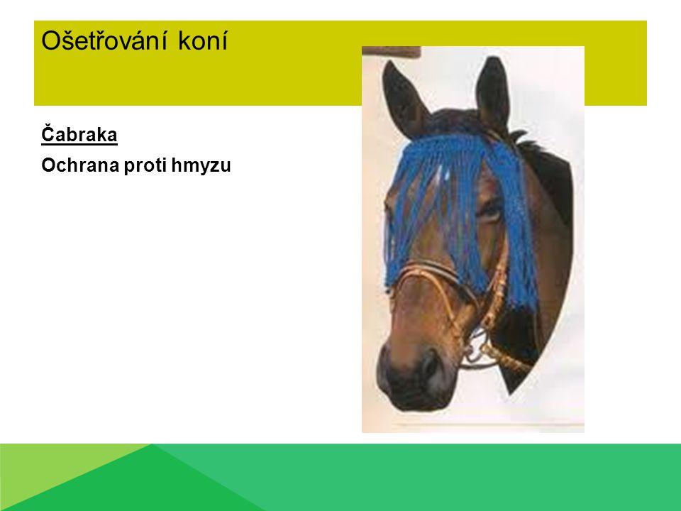 Ošetřování koní Čabraka Ochrana proti hmyzu
