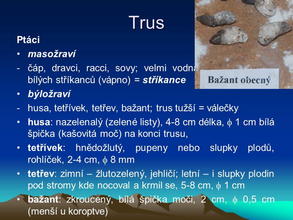 Trus Ptáci masožraví -čáp, dravci, racci, sovy; velmi vodnatý, řídký podoba bílých stříkanců (vápno) = stříkance býložraví -husa, tetřívek, tetřev, ba