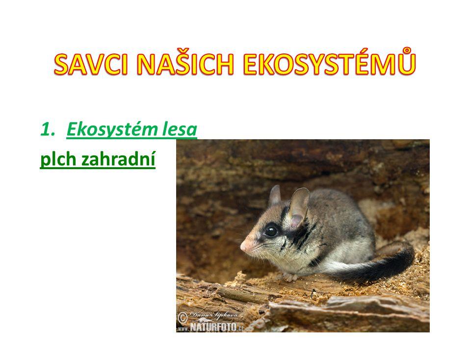 1.Ekosystém lesa plch zahradní