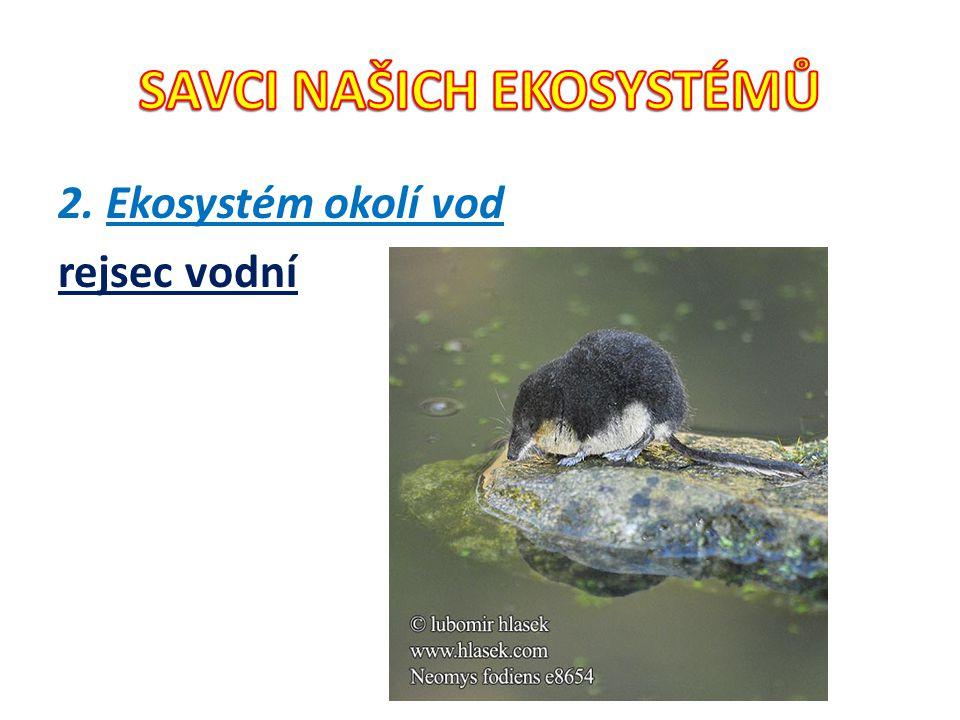 2. Ekosystém okolí vod rejsec vodní
