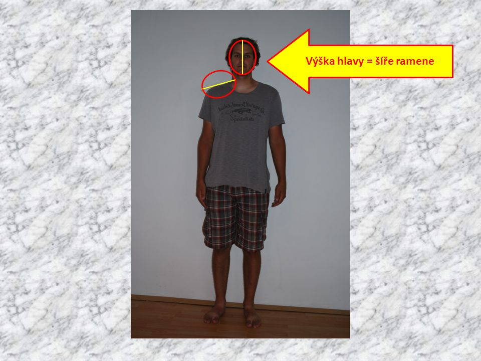 Výška hlavy = šíře ramene