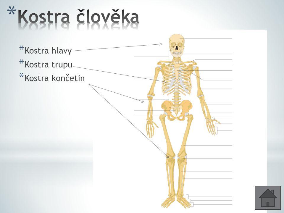 AuthorTubantiaTubantia Zánártní kosti /7/ Články prstů Nártní kosti
