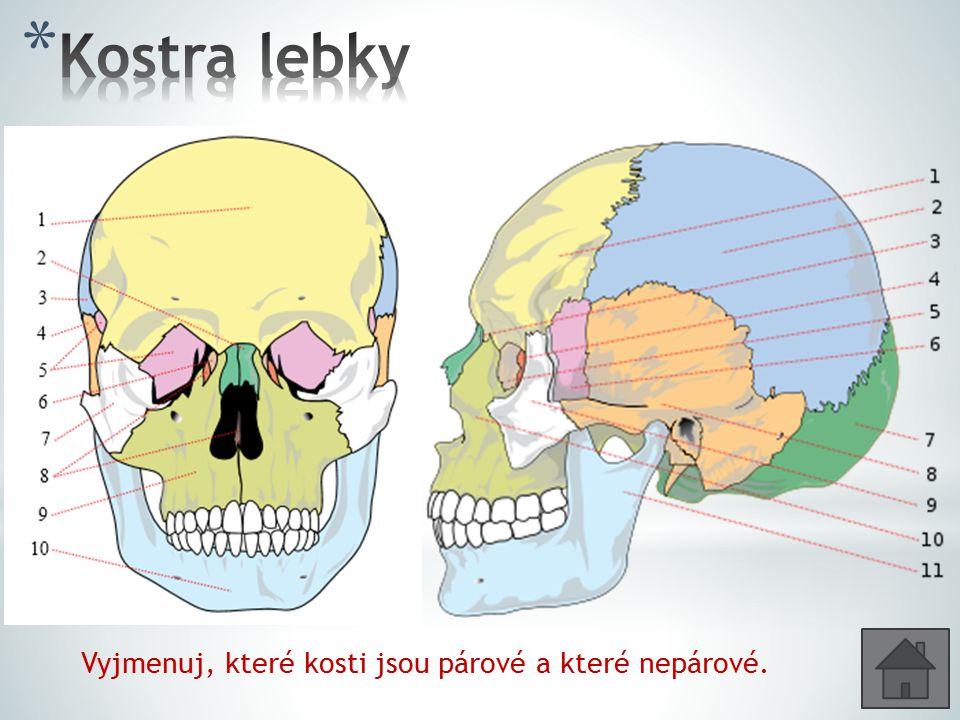 Vyjmenuj, které kosti jsou párové a které nepárové.