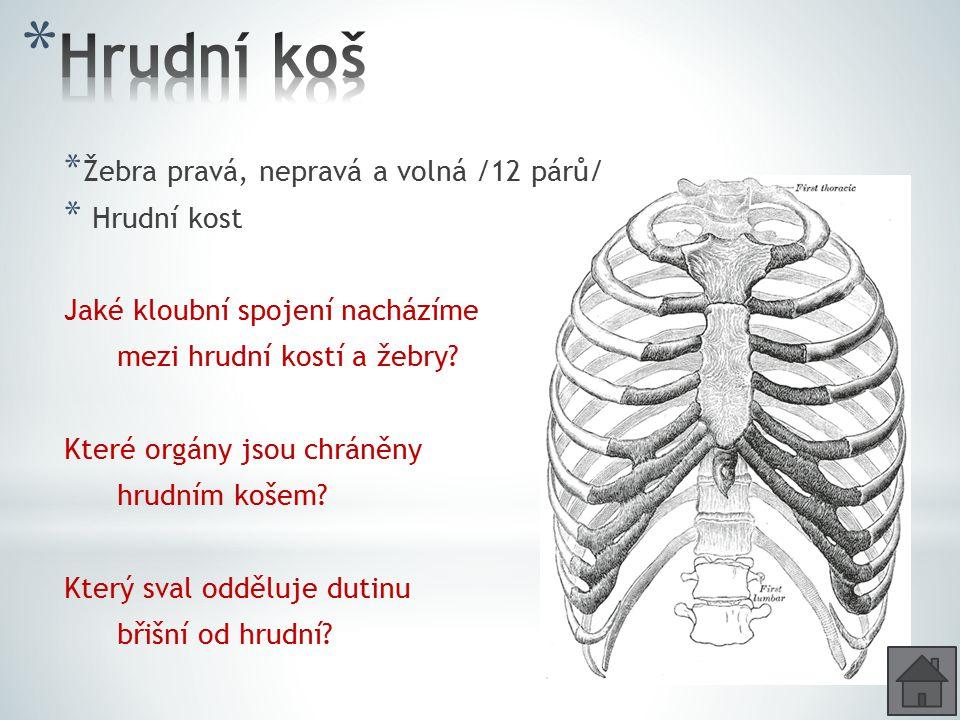 * Žebra pravá, nepravá a volná /12 párů/ * Hrudní kost Jaké kloubní spojení nacházíme mezi hrudní kostí a žebry? Které orgány jsou chráněny hrudním ko
