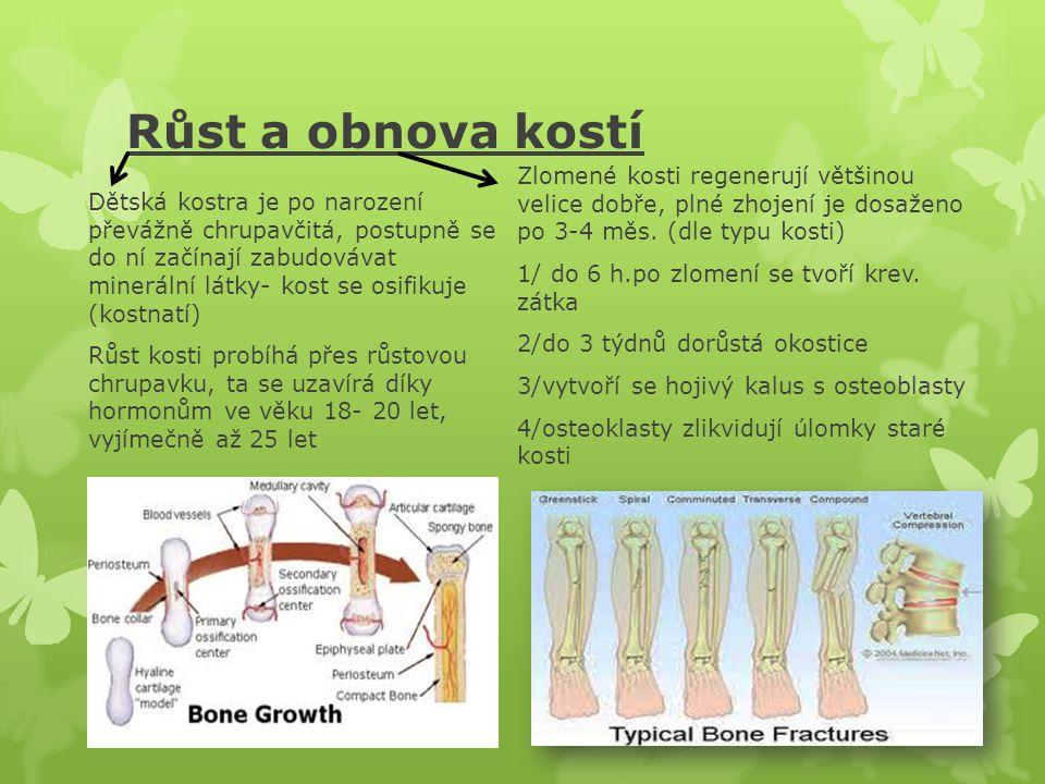 Typy kostí Kosti dělíme na: dlouhé( tvoří páky pro pohyb- pažní, vřetenní, loketní, stehenní, bércová, lýtková), krátké (jsou součástí větších funkčních celků- články prstů, obratle, kosti chodidla, zápěstí…), ploché (mají většinou ochrannou funkci- kosti lebky, pánve, hrudní kost) a kosti nepravidelného tvaru Někde se uvádějí i kosti pneumatizované (s dutinami vyplněnými vzduchem- kost čichová, čelní)