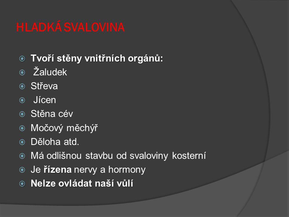 HLADKÁ SVALOVINA  Tvoří stěny vnitřních orgánů:  Žaludek  Střeva  Jícen  Stěna cév  Močový měchýř  Děloha atd.  Má odlišnou stavbu od svalovin