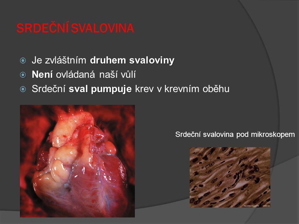 SRDEČNÍ SVALOVINA druhem svaloviny  Je zvláštním druhem svaloviny  Není  Není ovládaná naší vůlí sval pumpuje  Srdeční sval pumpuje krev v krevním