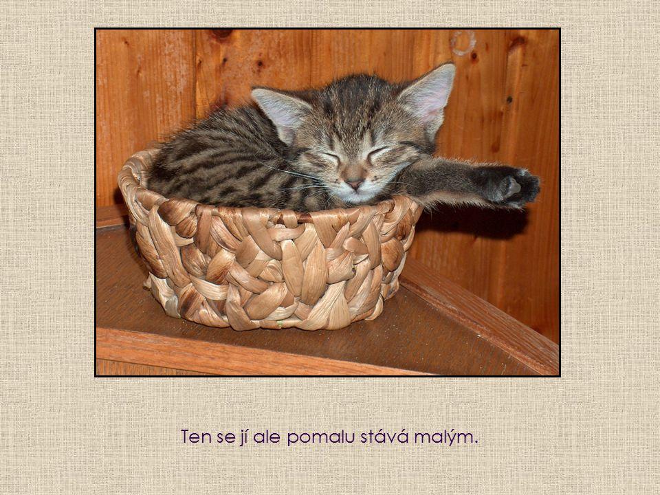Třeštík už je u jiných majitelů a tak Mrskačka spává sama v košíčku.