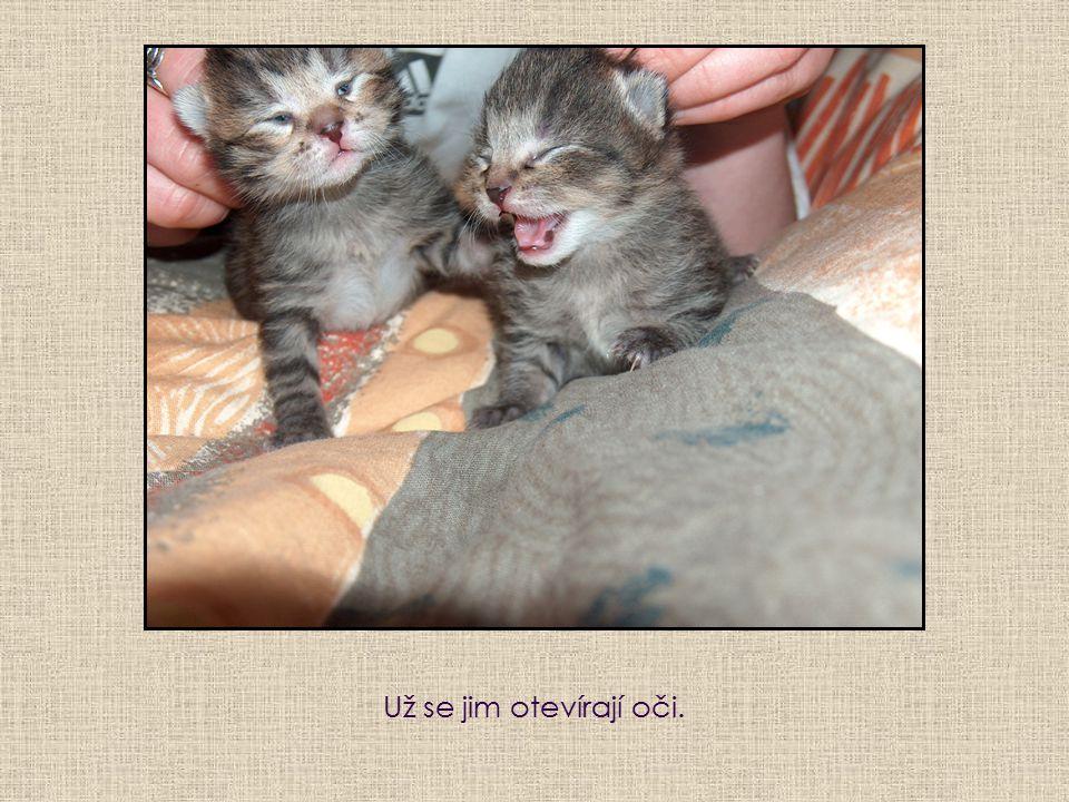 Už se jim otevírají oči.