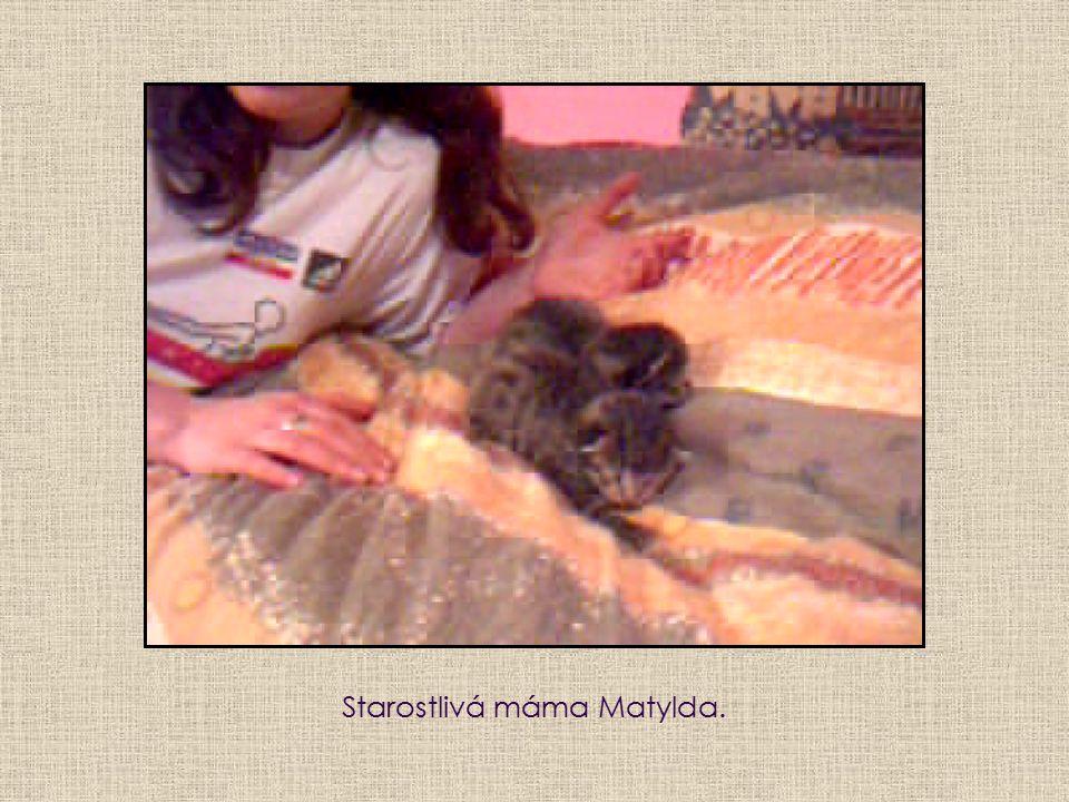 Starostlivá máma Matylda.
