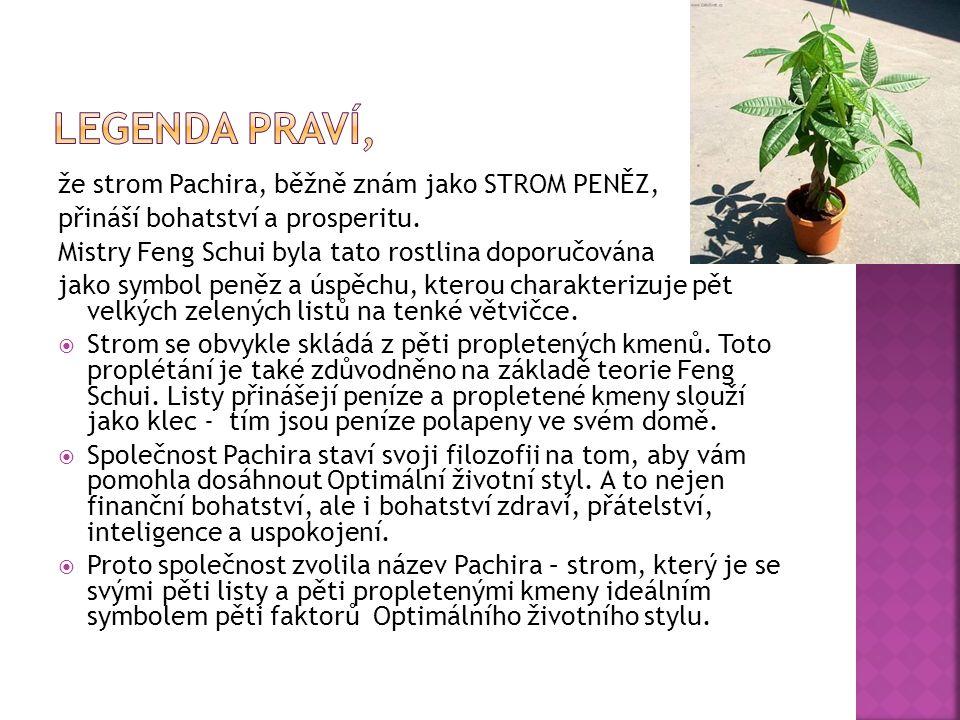 že strom Pachira, běžně znám jako STROM PENĚZ, přináší bohatství a prosperitu. Mistry Feng Schui byla tato rostlina doporučována jako symbol peněz a ú