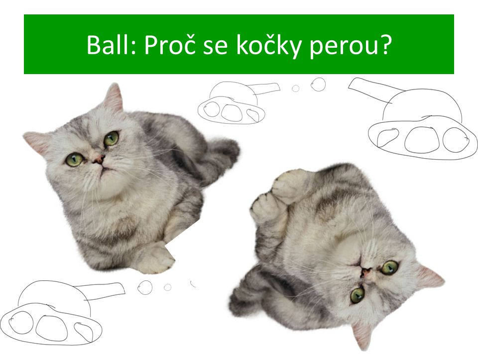 Ball: Proč se kočky perou