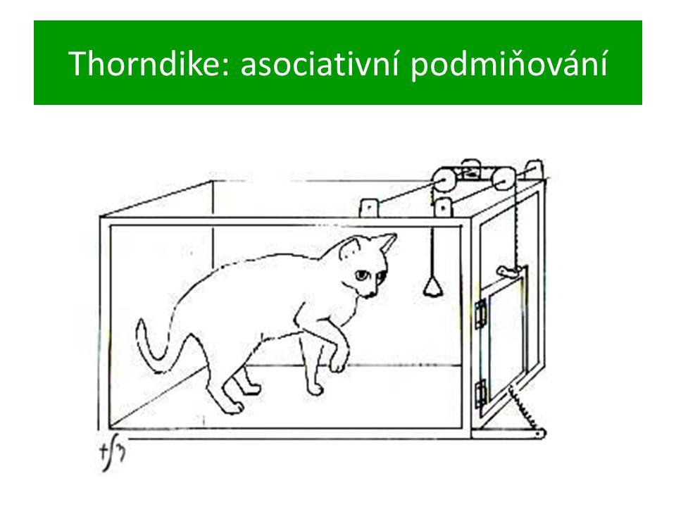 Thorndike: asociativní podmiňování