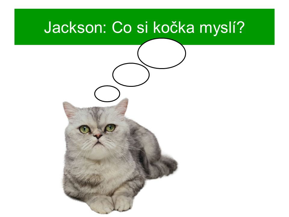 Jackson: Co si kočka myslí?