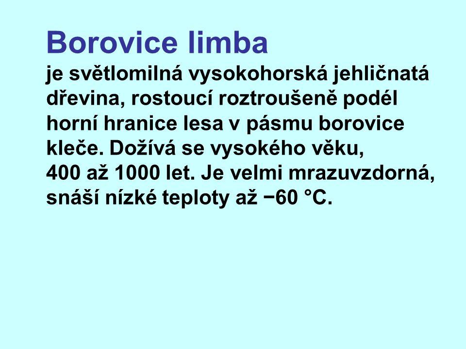 Borovice limba je světlomilná vysokohorská jehličnatá dřevina, rostoucí roztroušeně podél horní hranice lesa v pásmu borovice kleče. Dožívá se vysokéh