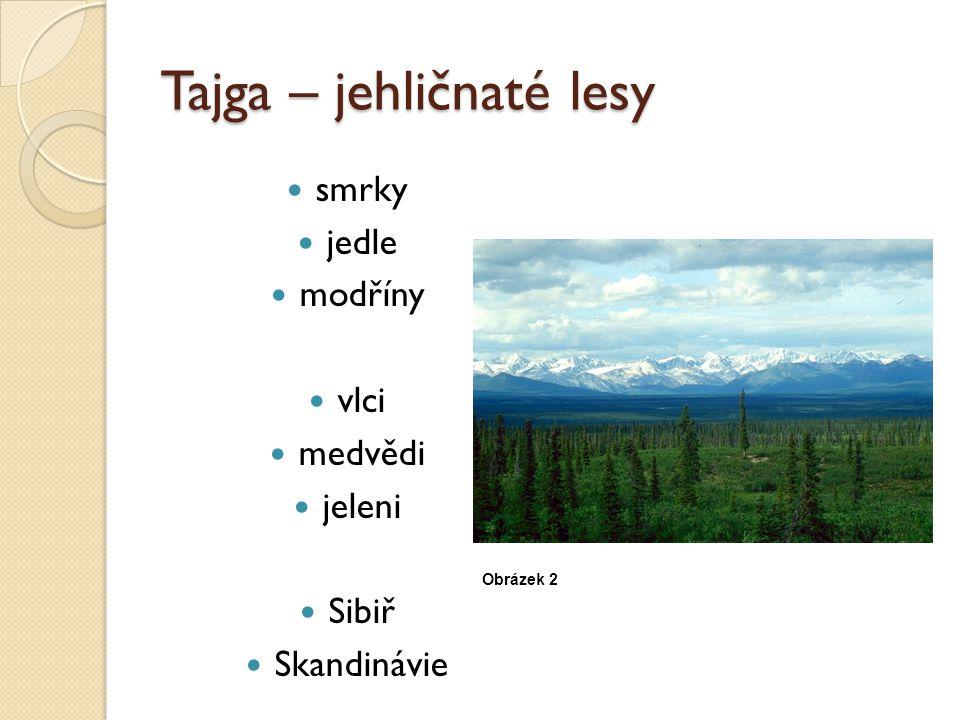 Tajga – jehličnaté lesy smrky jedle modříny vlci medvědi jeleni Sibiř Skandinávie Obrázek 2