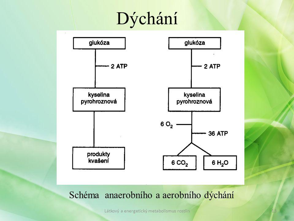 Dýchání Schéma anaerobního a aerobního dýchání 13Látkový a energetický metabolismus rostlin