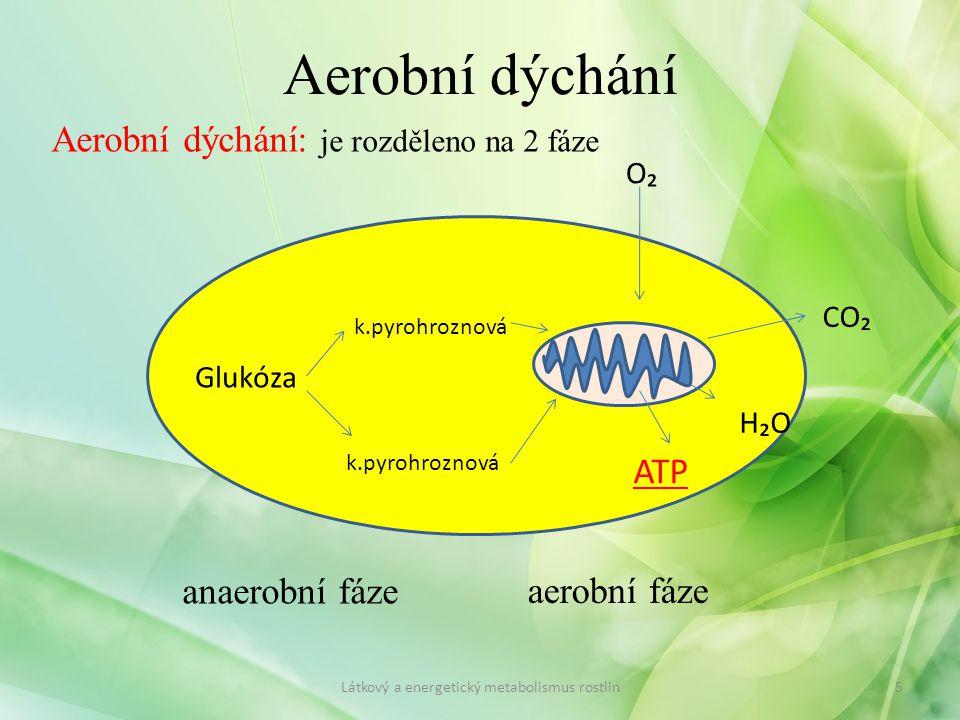 Aerobní dýchání Aerobní dýchání: je rozděleno na 2 fáze Látkový a energetický metabolismus rostlin5 Glukóza k.pyrohroznová O₂ CO₂ ATP H₂O anaerobní fá