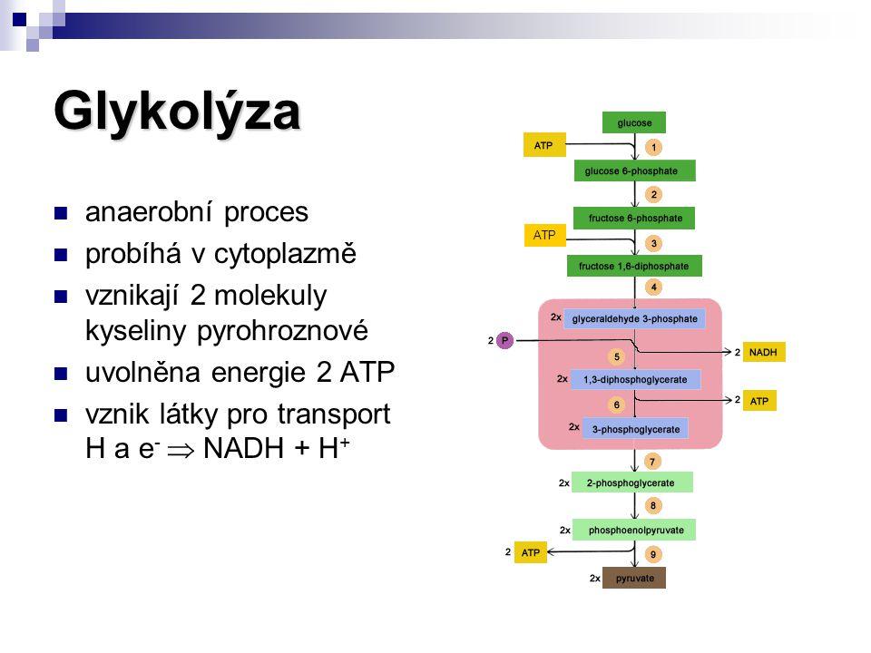 Aerobní dekarboxylace kyseliny pyrohroznové dekarboxylace = odebírání CO 2 vzniká acetyl CoA vznik NADH + H + probíhá v matrix mitochondrií