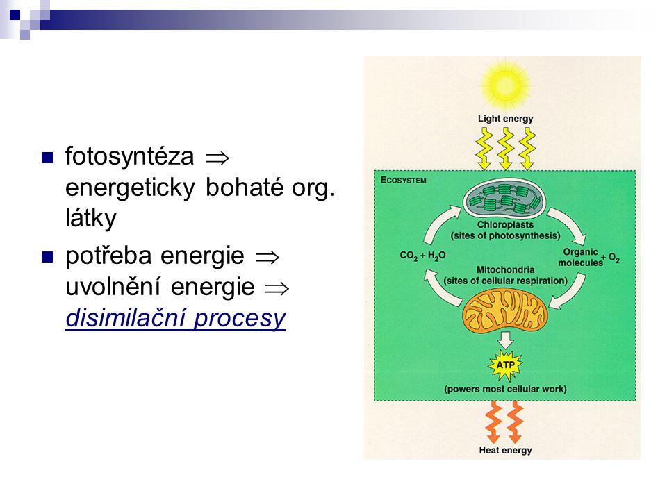 Disimilační procesy aerobně  dýchání anaerobně  kvašení (fermentace)  alkoholové kvašení  mléčné kvašení  octové kvašení  máselné kvašení stejný začátek  glykolýza rozdílná energetická výtěžnost  38 ATP x 2 ATP