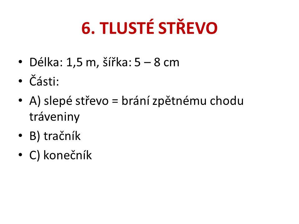 6. TLUSTÉ STŘEVO Délka: 1,5 m, šířka: 5 – 8 cm Části: A) slepé střevo = brání zpětnému chodu tráveniny B) tračník C) konečník